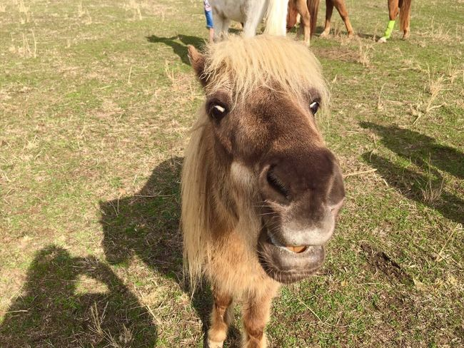 The Week On EyeEm Animal Themes Domestic Animals One Animal Mammal Livestock Grass Outdoors Day Standing Grazing No People Nature Close-up Horse Smile Laughing Tennessee