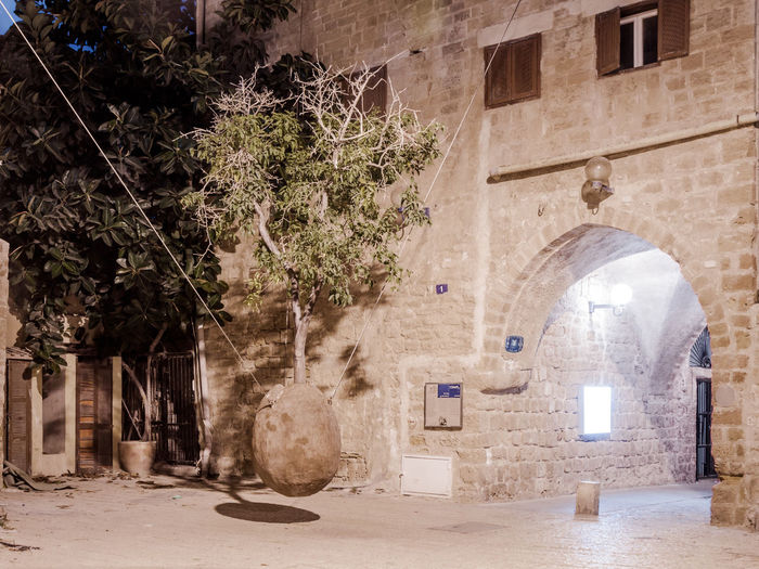 Orange hanging tree growing from a ossicle at night in old city Yafo, Israel. Architecture City Colorful Concept Decoration Design Drupel Famous Fruit Green History Israel Jaffa Night Object Orange Organic Pip Ripe Tel Aviv Tourism Travel Tree Vitamin Yafo