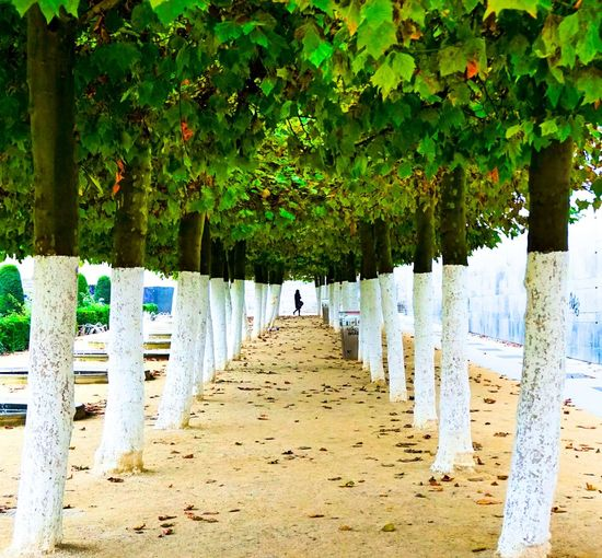 View of trees in row