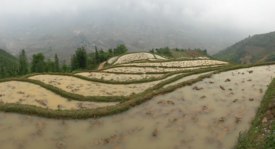 Rice Paddy South East Asia Agriculture Beauty In Nature Day Environment Field Fog Green Color Growth High Angle View Land Landscape Nature No People Outdoors Plant Plantation Rural Scene Sapa Vietnam Scenics - Nature Terraced Field Tranquil Scene Tranquility Tree