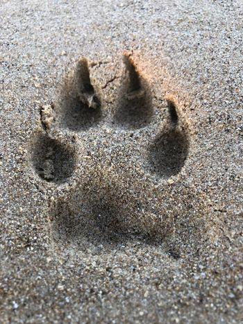 Sandy paws Sand Land Beach No People Close-up Nature Animal