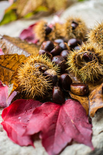 Chestnuts Food Close-up Wellbeing No People Freshness Healthy Eating Selective Focus Still Life Chestnut - Food Dry Nut - Food Day Plant Part Nut Leaf Nature Focus On Foreground Fruit Chestnut Outdoors Leaves Dried Autumn Autumn colors Autumn Mood