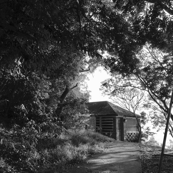 Tree Architecture Building Exterior Built Structure Beauty In Nature Scenics Black & White Black And White Sunlight And Shadow Light And Shadow Tranquil Scene Silhouette IPhoneography Landscape Tree Sun Light Through Trees House Outdoors Country House Nature Day Sky