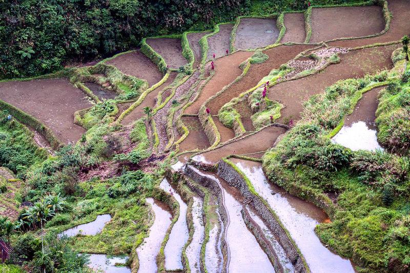 Reflection in Batad, Banaue, Philippines. EyeEm Nature Lover EyeEm New Here EyeEm Gallery Green Reflection Beauty In Nature Landscape Nature Outdoors Rice Terraces Ricefield Scenics Travel Destinations