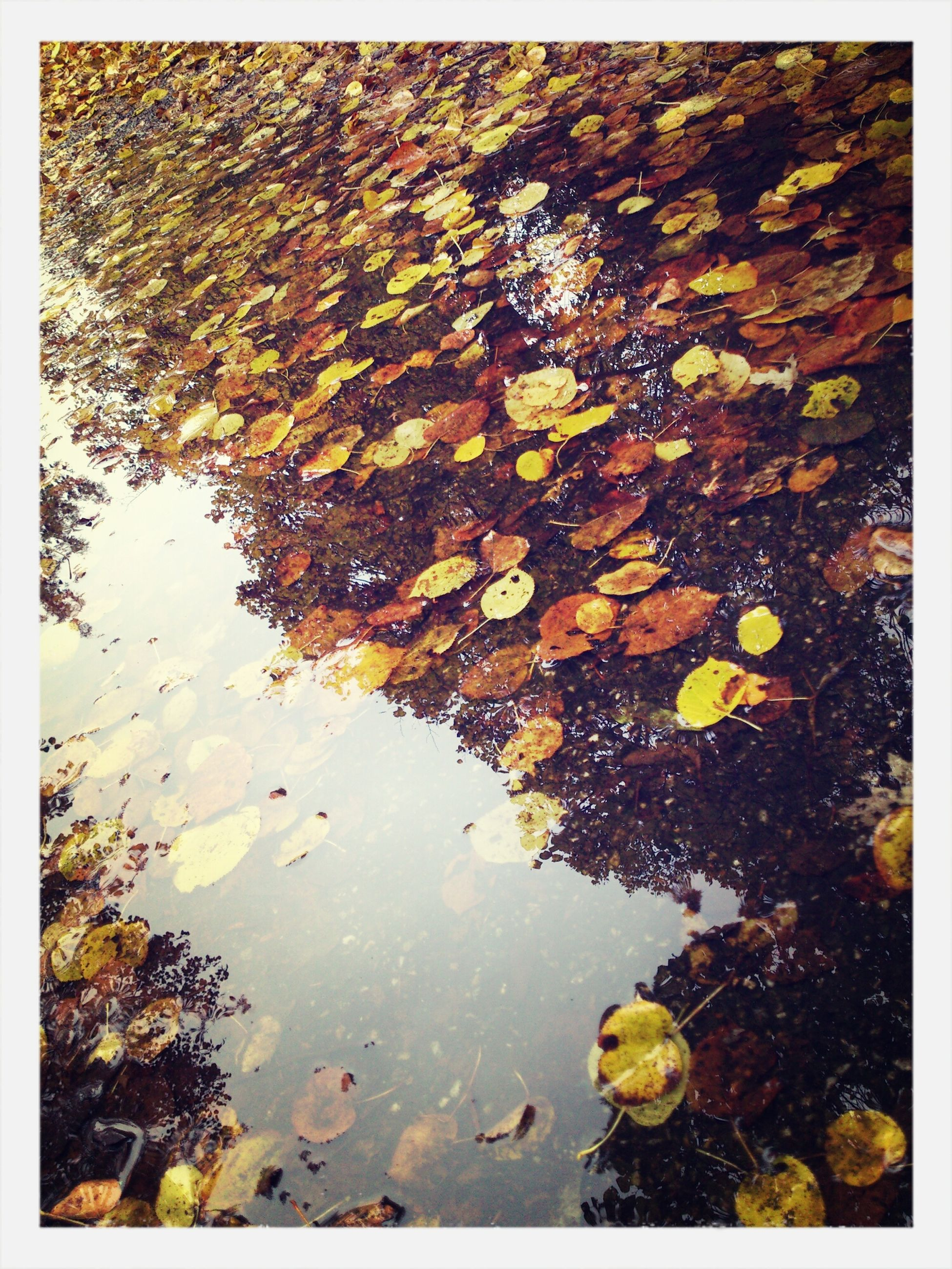 water, reflection, puddle, transfer print, wet, leaf, season, high angle view, auto post production filter, autumn, lake, nature, rain, tranquility, standing water, leaves, day, outdoors, pond, floating on water