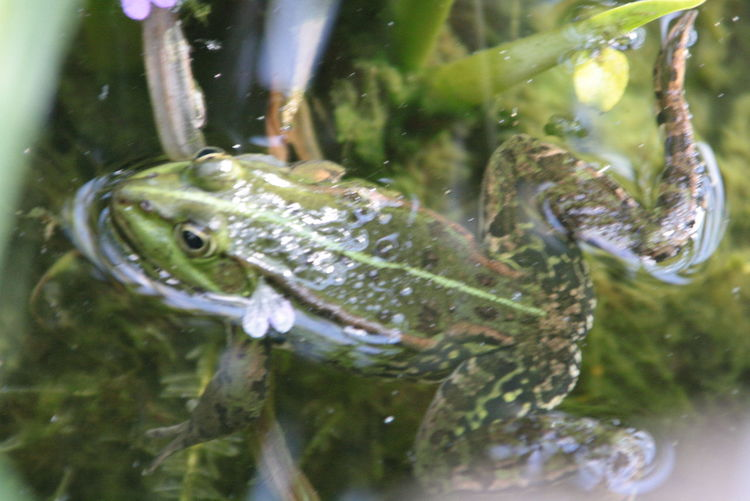Nature Animals Garden