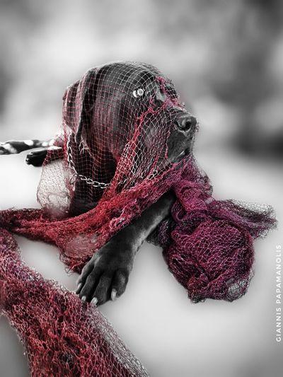 #Splash #EyeEm #colorsplash Greece #edited Editorial Fashion #EyemEdit #eyembestshot #EyeEmBestShots Dog Canecorso  Cane Corso Canecorsoitaliano Mastiff ItalianMastiff Pet Photography  Pet Love Cute Love Lovemydog Like4like Blue Puppy