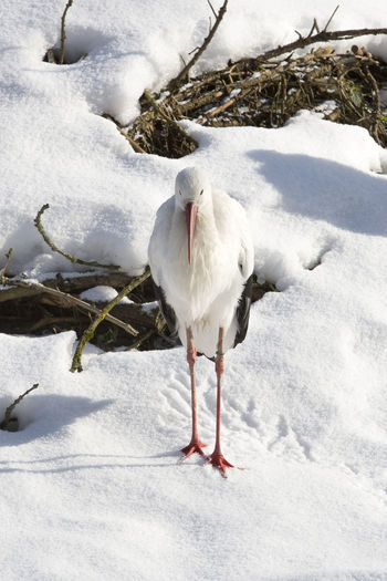 White bird on snow covered field