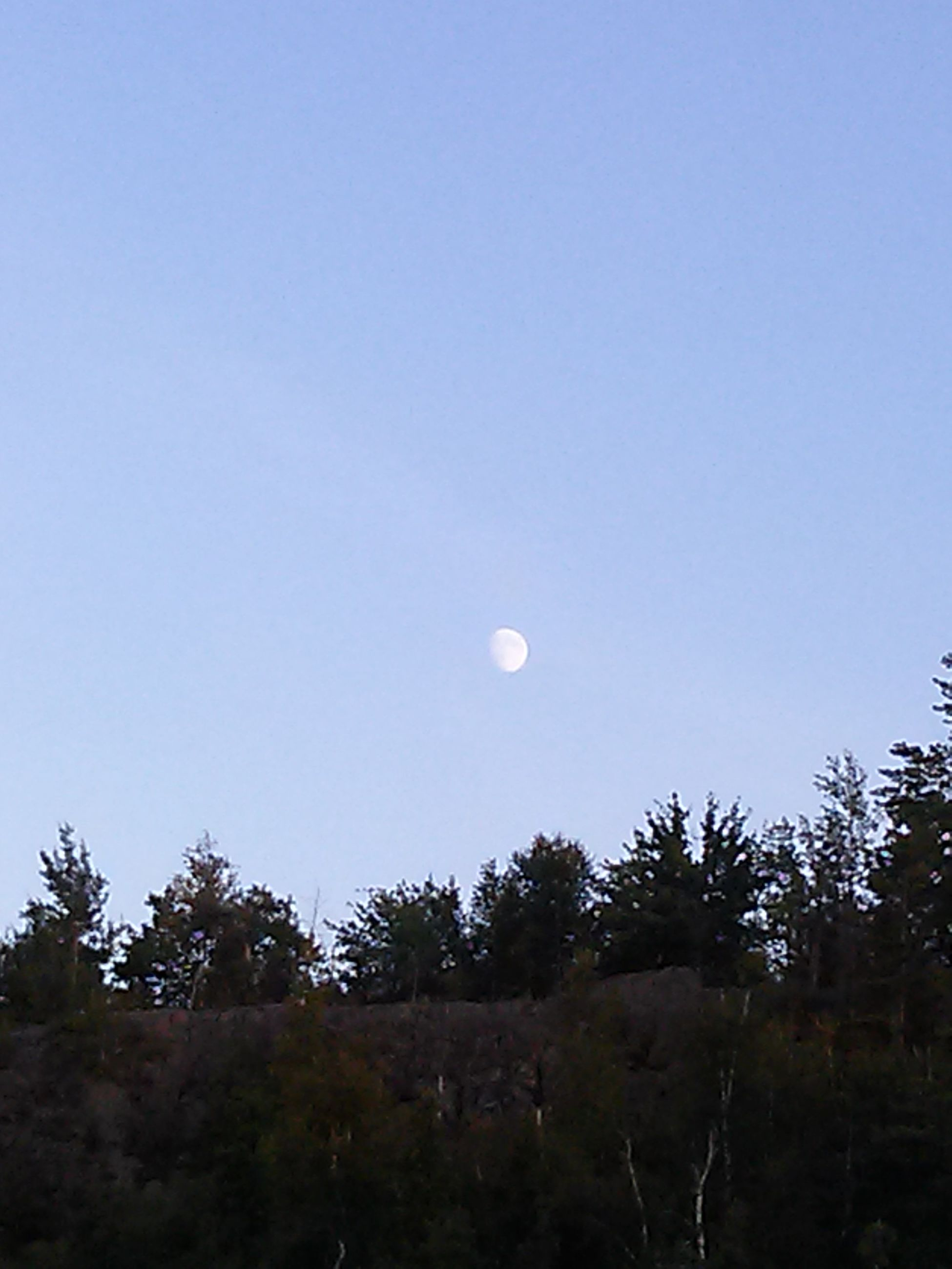 clear sky, moon, copy space, tranquility, tranquil scene, beauty in nature, tree, low angle view, scenics, nature, sky, silhouette, full moon, blue, astronomy, idyllic, growth, outdoors, dusk, no people