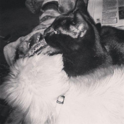 They cuddle together. :,) MyBABiES Cuddlebuddie Catdog Inez Symphony