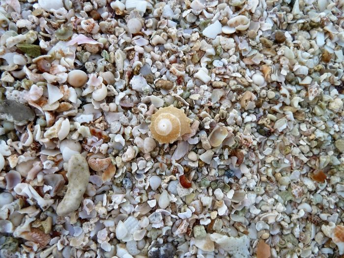 Animal Themes Backgrounds Beach Beauty In Nature Close-up Day Fragility Full Frame Nature No People Outdoors Sea Life Seashell