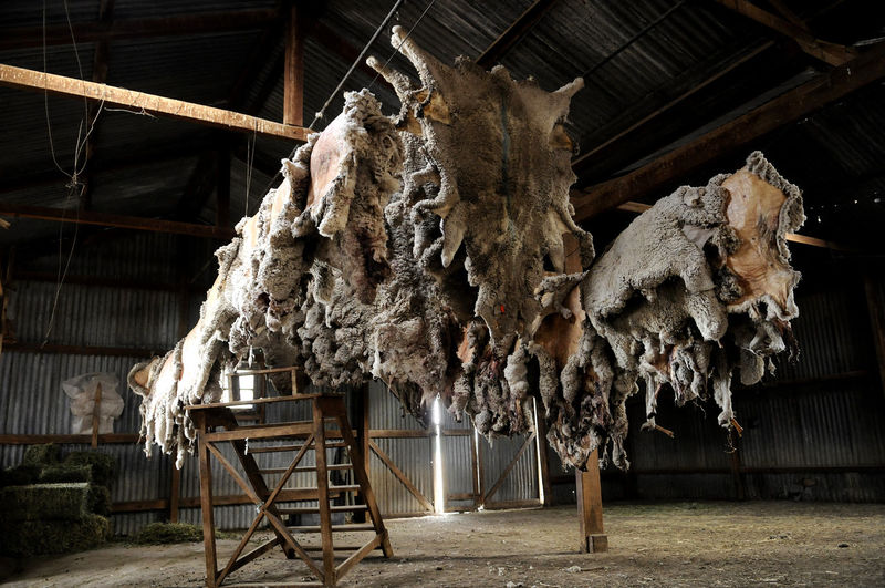 Lana Leather Agricultural Building Argentina Argentina Photography Hanging History No People Patagonia Patagonia Argentina Shear Shearing Sheep Wool