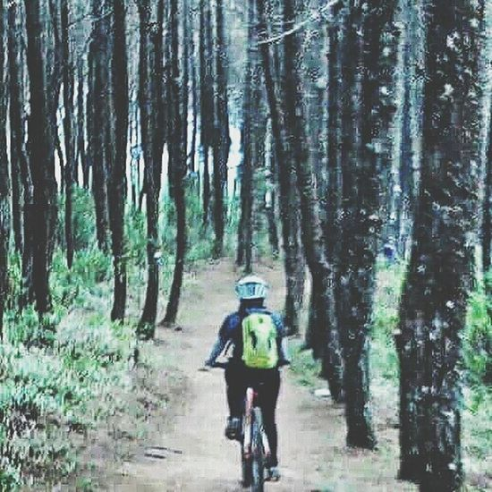 into the woods.. Cycling Bike Tour Bycicle Into The Woods Pine Trees Pine Forest EyeEm Nature Lover Fresh Air Outdoor Activity Adventure On The Mountain Enjoying Life