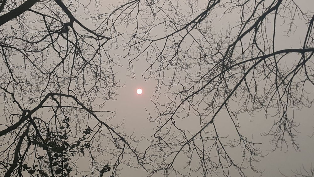 Sun Beauty In Nature Nature Outdoors Bare Tree Branch Scenics No People Winter Sky Day Tree Space Unexpected Photo EyeEm Selects Landscape No Filter Tranquility No Filter, No Edit, Just Photography Orange Sun Orange Sky Sahara Sand Storm Ophelia Unedited Cambridge, United Kingdom