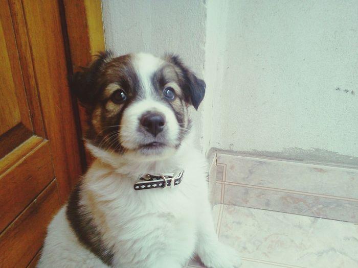 Perritooo! Mi Mascota