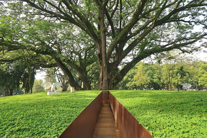 Alley Of Trees Alley Photography Alley Way Beauty In Nature Day Diminishing Perspective Direction Footpath Grass Green Color Growth Land Nature No People Outdoors Park Park - Man Made Space Plant The Way Forward Tranquil Scene Tranquility Tree Tree Trunk Treelined Trunk