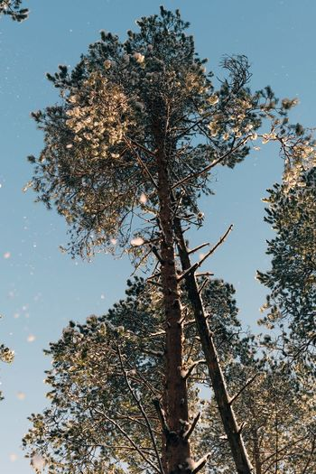 Trip Winter Forest Plant Tree Sky Low Angle View Nature Growth Branch No People Day Outdoors Blue Sunlight Clear Sky