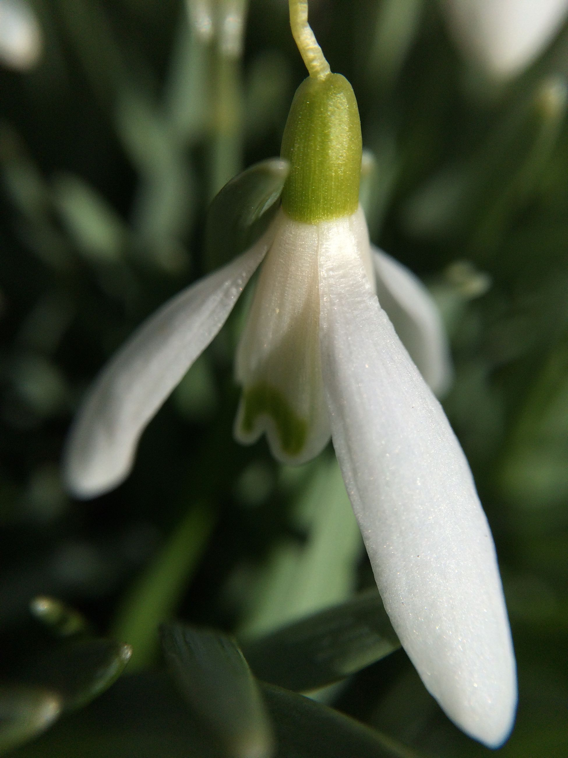 flower, freshness, growth, fragility, close-up, petal, beauty in nature, white color, flower head, nature, focus on foreground, plant, drop, selective focus, blooming, bud, wet, outdoors, white, in bloom