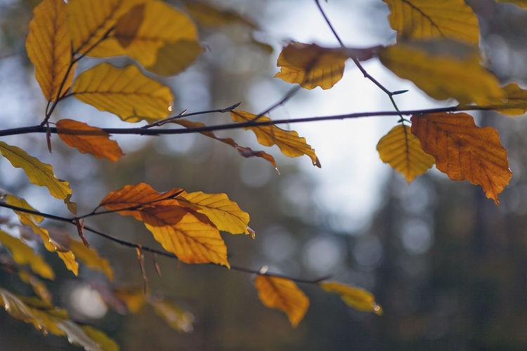 Close-up of autumn leaves against sky