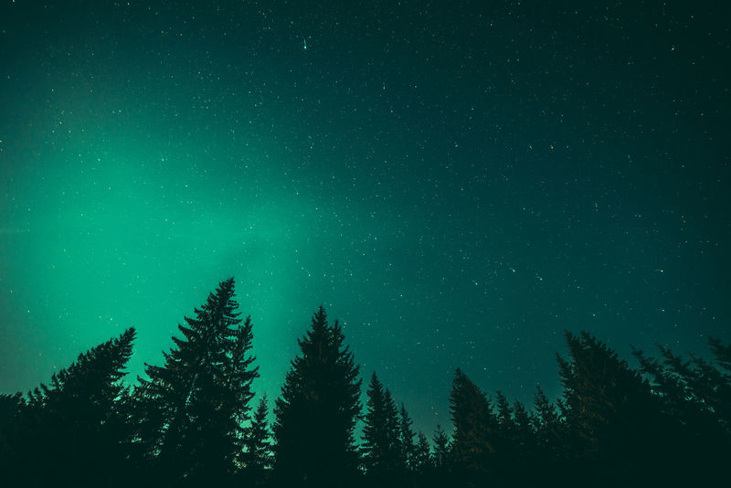 Astronomy Aurora Polaris Beauty In Nature Constellation Galaxy Green Color Landscape Luminosity Milky Way Nature Night No People Outdoors Scenics Sky Space Space And Astronomy Space Exploration Star - Space Star Field Tree Treetop