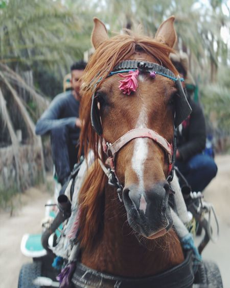 BYOPaper! Horse Domestic Animals Animal Themes Mammal Bridle Focus On Foreground One Animal Day Horse Cart No People Transportation Outdoors Portrait Close-up Nature South Beauty In Nature Pet Portraits