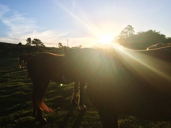 Sunset with horses Farm Horses Grass Sunset Light Cold Spring