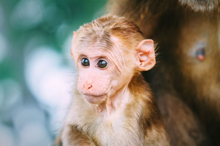 Close-Up Of Young Monkey