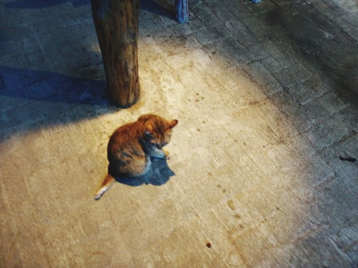 Lonely Under The Light Pets High Angle View Cat Domestic Cat