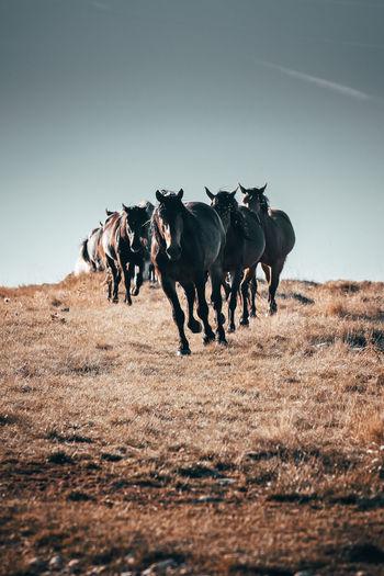 Horses running on land against sky