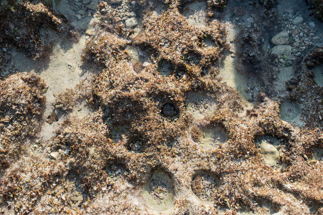 Directly Above Shot Of Dried Coral At Beach