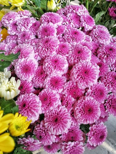 some flower offerings during 清明 (ching ming)... Chrysanthemums Flowers Flower Offerings Ching Ming Festival Purple Purple Flowers Flower Petal High Angle View Pink Color Close-up Plant In Bloom