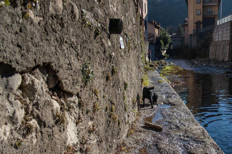 Val Vertova ValVertova Animal Themes Architecture Building Exterior Built Structure Day Langbart Mammal Nature No People Outdoors Valle Vertova Vertova Water