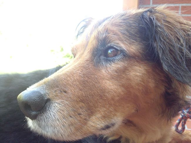 Sad Dog Marie