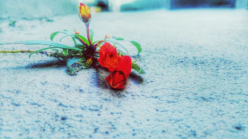Red Red Flower On The Floor Nature Everywhere Perspectives Simple Beauty Connected With Nature Flower Xperiaz EyeEm Nature Lover