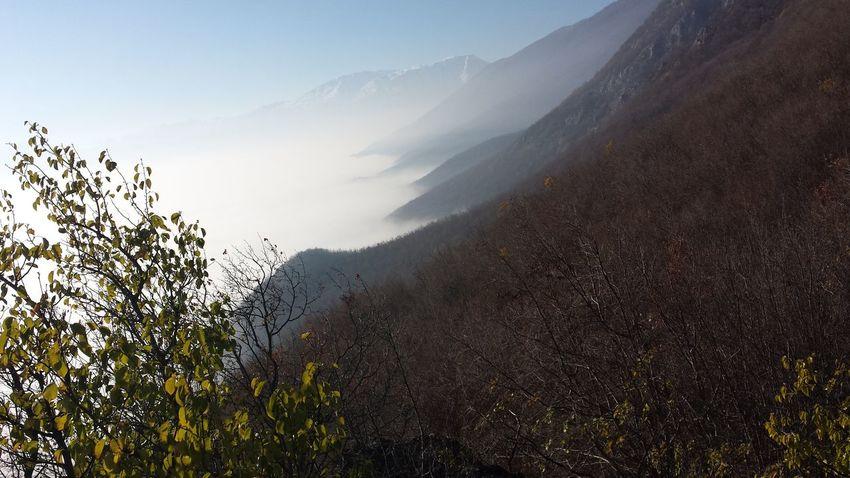 Freelance Life Foggy Fog