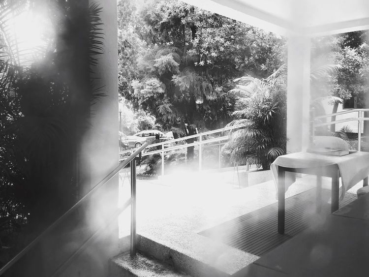 Beauty In Nature Urban Oasis Pattern, Texture, Shape And Form Beauty In Ordinary Things Urban Landscape Plants And Trees Light And Shadow IPhoneography Sun And Shadow Building And Trees Black & White Black And White Condensation On A Window Looking Out Of The Window Another Point Of View