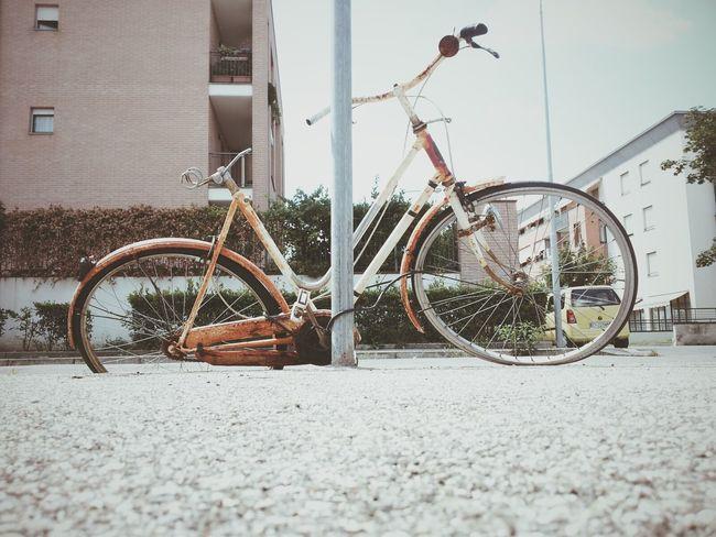 VSCO Vscocam Bycicle