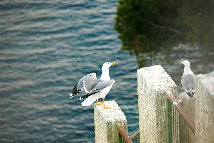 High Angle View Of Seagulls Perching On Retaining Wall By Sea