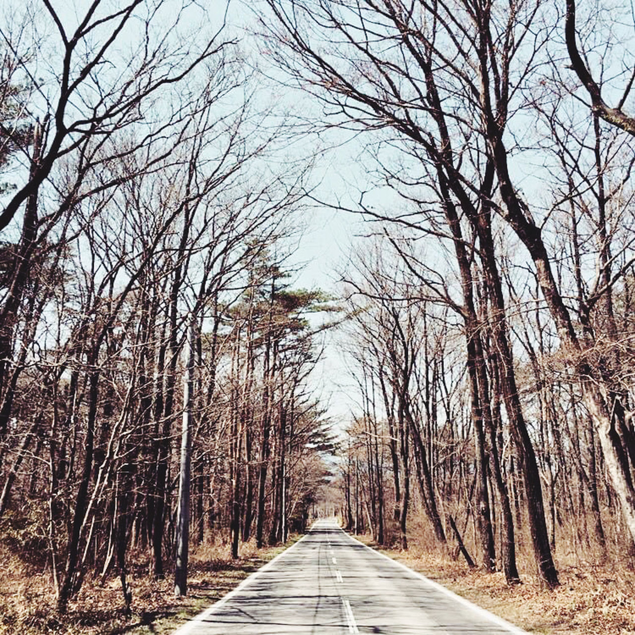 EMPTY ROAD ALONG BARE TREES AND PLANTS