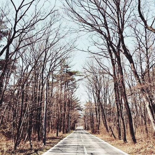 Empty road amidst bare trees against sky