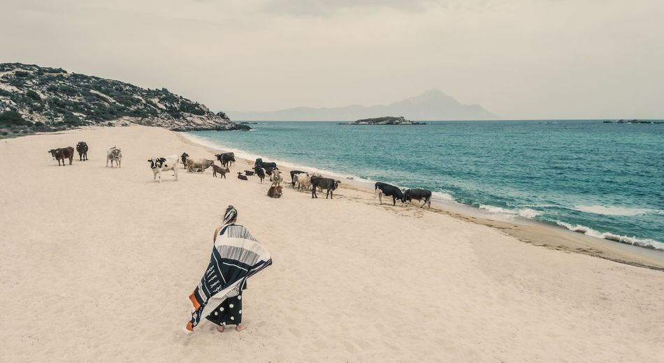 Rear view of woman standing by cows on sandy beach