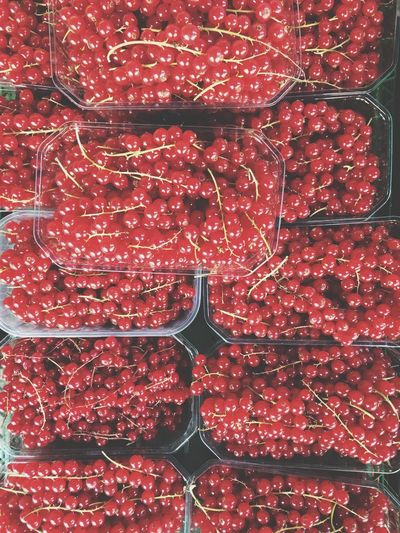 Red Redcurrant Fruit