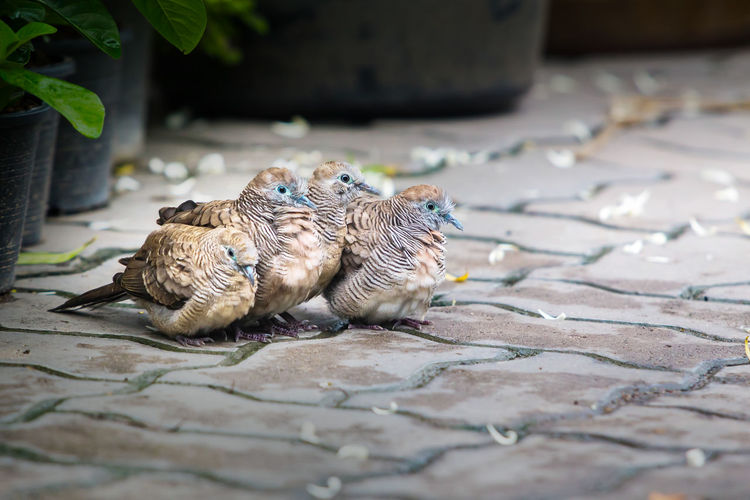 High angle view of birds eating on footpath