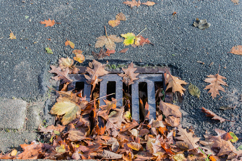 Clogged manhole cover on a street Autumn Autumn Leaves Avenue Country Road Drain GULLY Gully Cover Manhole Cover Clogged Constipation Danger Danger Of Slipping Dangerous Foliage Gulli Gullydeckel Leaf Leaves Muddy Rainwater Season  Shaft Slippery Wet