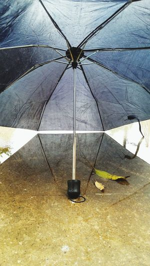 Rain Umberella