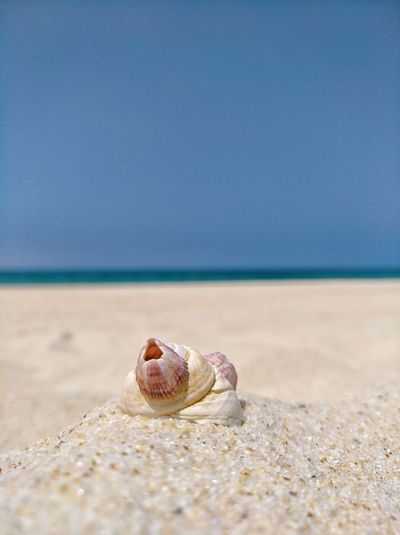 Beach Shell Sea