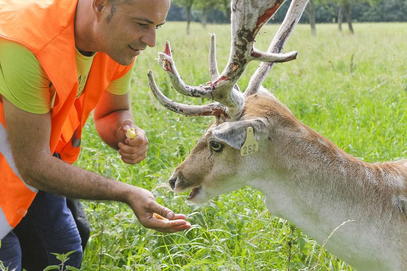 Man Feeding Deer On Field