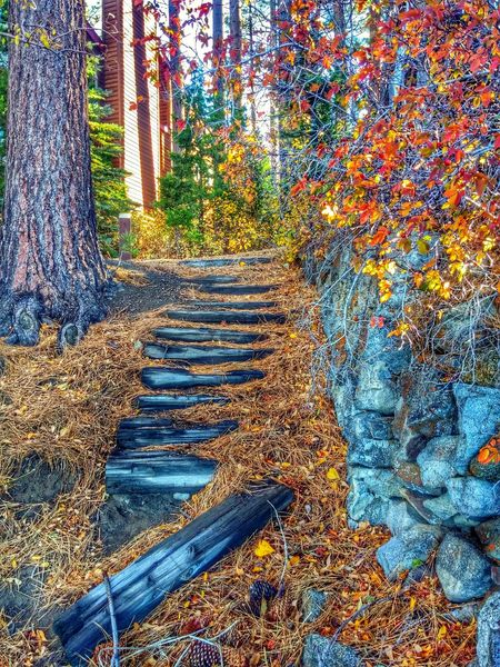 Tahoe HDR SCAPE EyeEm Best Edits Streamzoofamily Nature_collection Rsa_nature Landscape_Collection Streamzoo_Ville Steps As Time Goes By