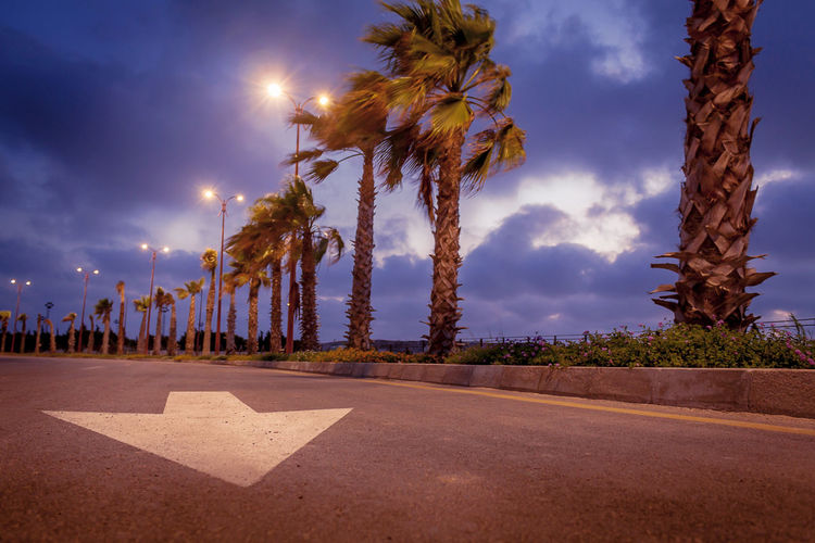 The lovely winter in Alexandria Arrow Cloudy Light Palm Tree Road Winter Wintertime Arrow Symbol Clouds Clouds And Sky Day Illuminated Nature No People Outdoors Palm Trees Road Sky Tree