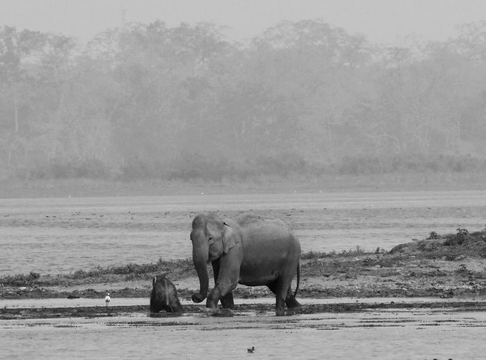 Side view of elephant family in muddy water